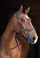 Rambo Micklem MultiBridle Rubber Reins Brass fittings