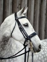 Amerigo Vespucci Patent Double Bridle with Reins